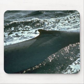 Blue whale, dorsal fin mouse pad