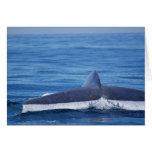 Blue Whale Fluke II Greeting Cards