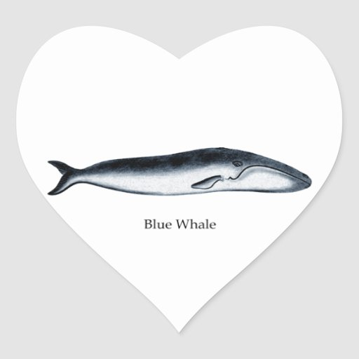 Blue Whale Illustration (titled) Heart Sticker