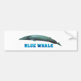 Blue Whale image for Bumper-Sticker Bumper Sticker