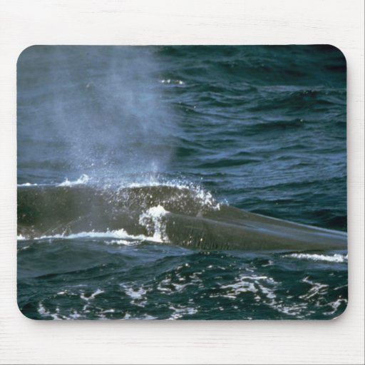 Blue whale mouse pad