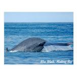 Blue Whale Postcard