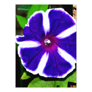 Blue, White and Purple Morning Glory 5.5x7.5 Paper Invitation Card