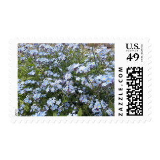 Blue wild Forget-Me-Not flowers Postage