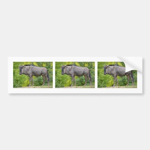 Blue wildebeest bumper sticker