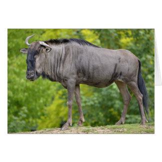 Blue wildebeest greeting card