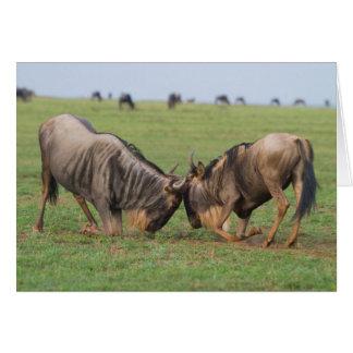 Blue Wildebeest (Connochaetes Taurinus) Rutting Greeting Card