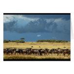Blue Wildebeest (GNU) Masai Mara Kenya card