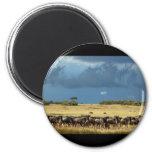 Blue Wildebeest (GNU) Masai Mara Kenya magnets