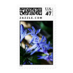 Blue Wildflower Custom Stamps