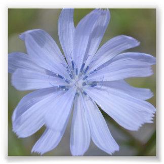Blue Wildflower Photo Print