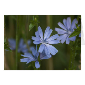 Blue Wildflowers Card