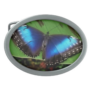 Blue Wing Butterfly Buckle Oval Belt Buckles