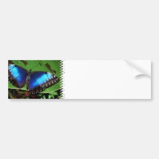 Blue Wing Butterfly Bumper Stickers