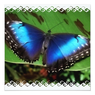 Blue Wing Butterfly Invitations
