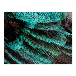 Blue Wing Covert feathers Postcard