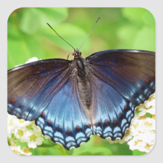 Blue Winged - Butterfly Square Sticker