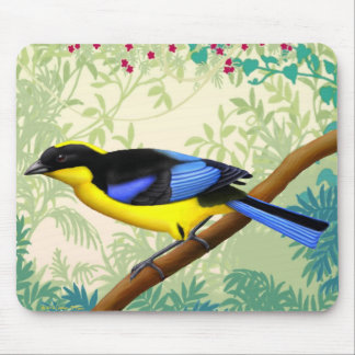 Blue Winged Mountain Tanager Bird Mousepad
