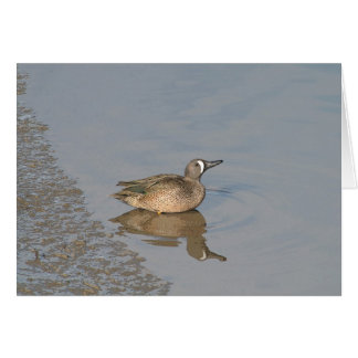 Blue-Winged Teal Card