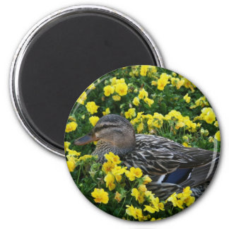 Blue Winged Teal Duck and Yellow Flowers Magnet