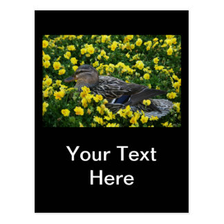 Blue Winged Teal Duck and Yellow Flowers Postcard