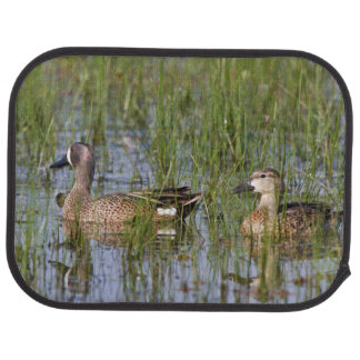 Blue-winged Teal male and female in wetland Car Floor Mat
