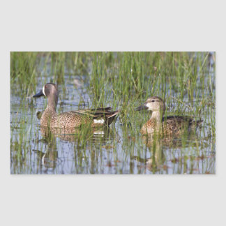 Blue-winged Teal male and female in wetland Rectangular Sticker