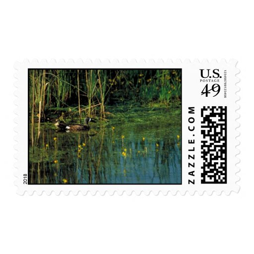 Blue-winged teal postage stamp