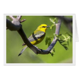 Blue-winged Warbler Card