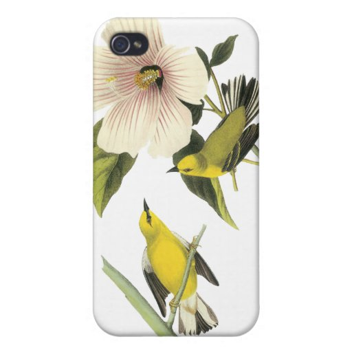 Blue-winged Warbler John Audubon iPhone 4/4S Cases