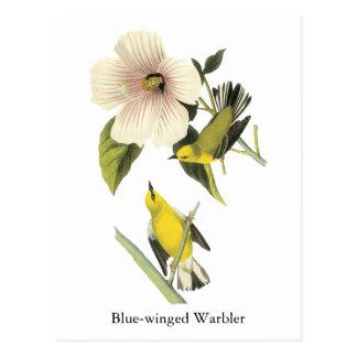 Blue-winged Warbler John Audubon Postcard