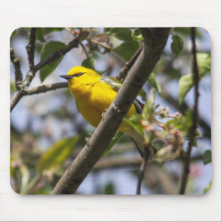 Blue-winged Warbler Mouse Pad
