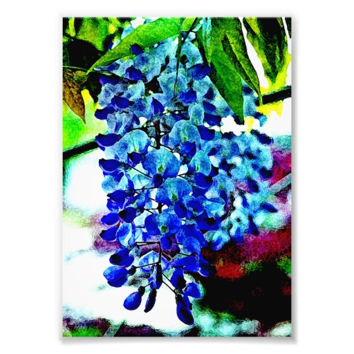 Blue Wisteria Photographic Print
