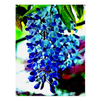 Blue Wisteria Post Cards