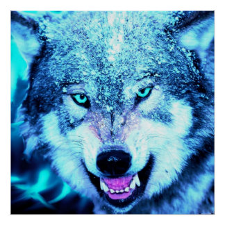 Blue wolf face poster