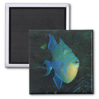 Blue, yellow and green fish - magnet