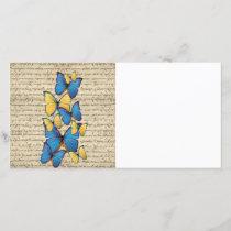 Blue & yellow butterrflies