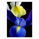 Blue & Yellow Iris Flowers 4b Card