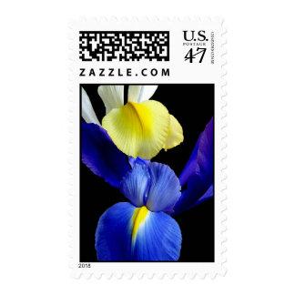Blue & Yellow Iris Flowers 4b Postage