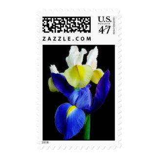 Blue & Yellow Irises 1b Postage