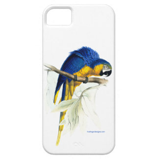 Blue & Yellow Parakeet by Edward Lear iPhone case