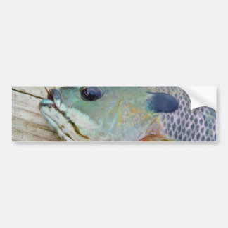 blue yellow purple teal, Bluegill fish on dock Bumper Sticker
