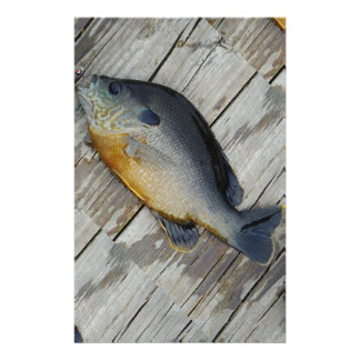 blue yellow purple teal, Bluegill fish on dock Stationery Paper