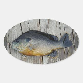 blue yellow purple teal, Bluegill fish on dock Sticker