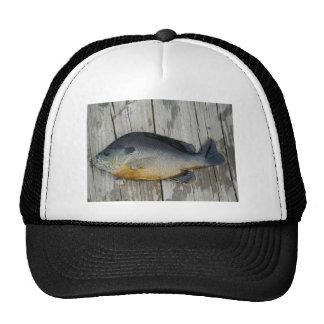 blue yellow purple teal, Bluegill fish on dock Trucker Hat