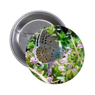 Blue Yellow With Black Spots Butterfly on Flowers Pins