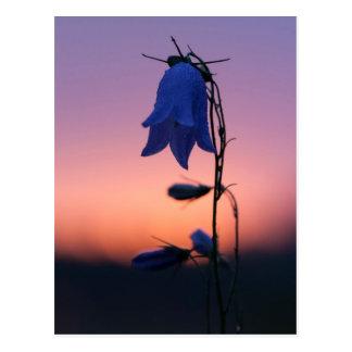 Bluebell flower at sunrise postcard