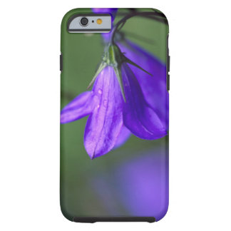 Bluebell flower in Independence Pass in Tough iPhone 6 Case