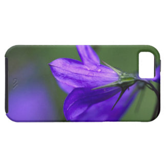 Bluebell flower in Independence Pass in iPhone 5 Case