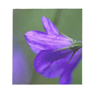 Bluebell flower in Independence Pass in Notepad